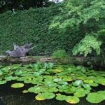 """<font size=""""16""""><b>Przyroda Ponidzia - Lilia wodna</b></font> Przyroda Ponidzia: Grzybień pospolicie zwany lilią-wodną fot. LGD PONIDZIE. Ogród botaniczny na rozstajach mlodzawy male<br> <b>Meta Data</b><br><b>Image Width</b> 1600<br><b>Image Height</b> 1200<br><br> <b>Meta Data</b><br><b>Image Width</b> 1600<br><b>Image Height</b> 1200<br>"""
