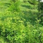 """<font size=""""16""""><b>Przyroda Ponidzia - Sukcesja wtórna roślinności</b></font> Przyroda Ponidzia - Sukcesja wtórna czyli powrót naturalnej roślinności drzew i krzewów na obszarze gdzie zaprzestano upraw rolniczych fot. LGD PONIDZIE<br> <b>Meta Data</b><br><b>Image Width</b> 1600<br><b>Image Height</b> 1200<br><br> <b>Meta Data</b><br><b>Image Width</b> 1600<br><b>Image Height</b> 1200<br>"""